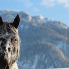 Pferd, Berge, Oberammergau