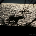Shadow Dog, running